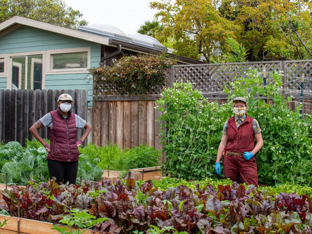Mo & Marianne of Berkeley Basket CSA