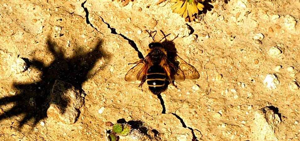 Bee dry