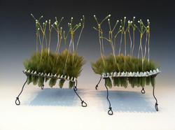 GMO Pollenscape 1.