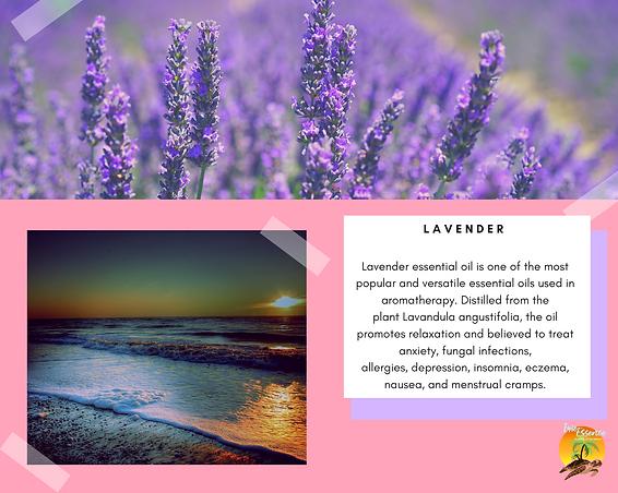 Lavender - week 1