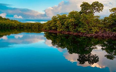 Mangrove02.jpg