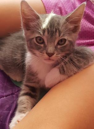 justine's kitten (3).jpg