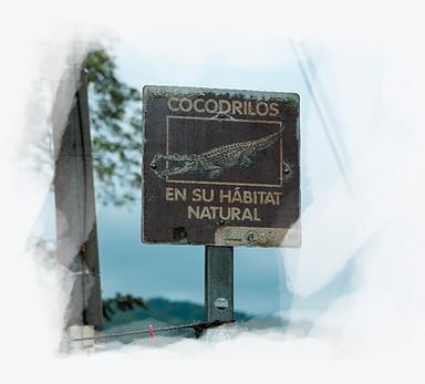 Crocodile 1_edited.png