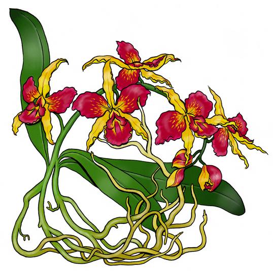 """Orchids"", 2019"