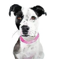 Block dog portrait.jpg