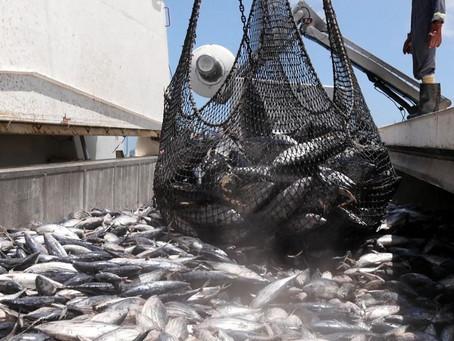 Fishing to Disaster