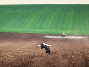 Sowing the Seeds of Environmental Failure