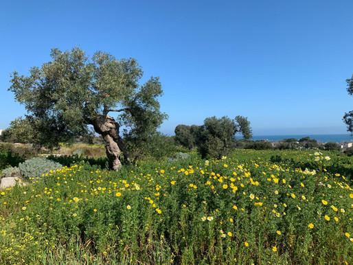 Puglia  -  May 2019