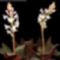 Orquideas charmosas e decorativas para dar de presente, para eventos, para festas, datas especiais, presente de casamento,  presente de aniversário. Entrega em todo o Brasil, São Paulo SP, Holambra, CIdade das FLores.