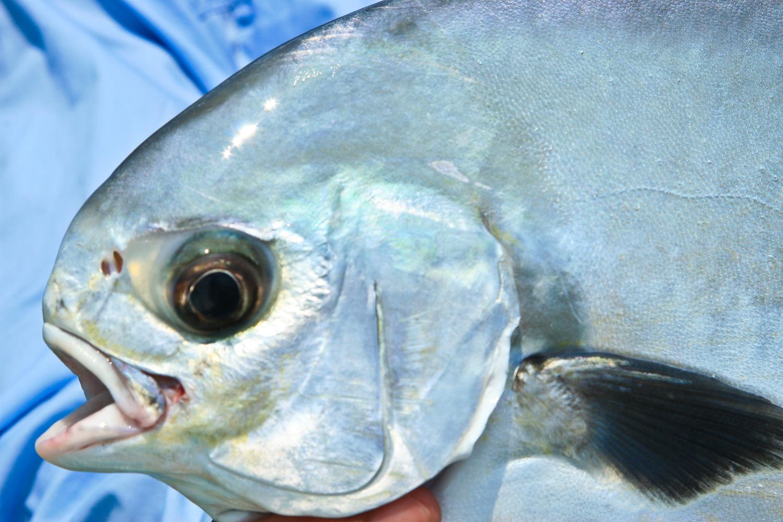 CANCUN FISHING DAY