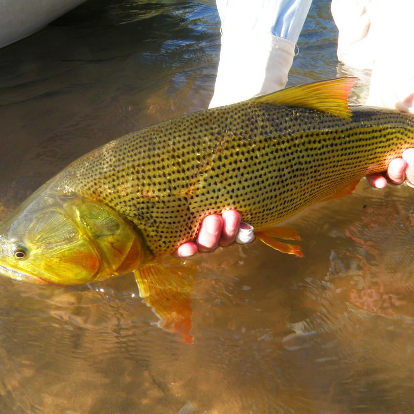 141 juramento fly fishing