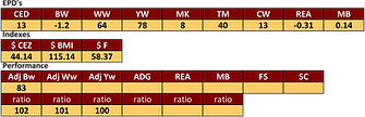 studers taylor made bull stats.png