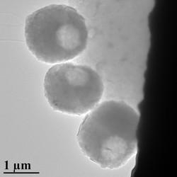 MXene spheres