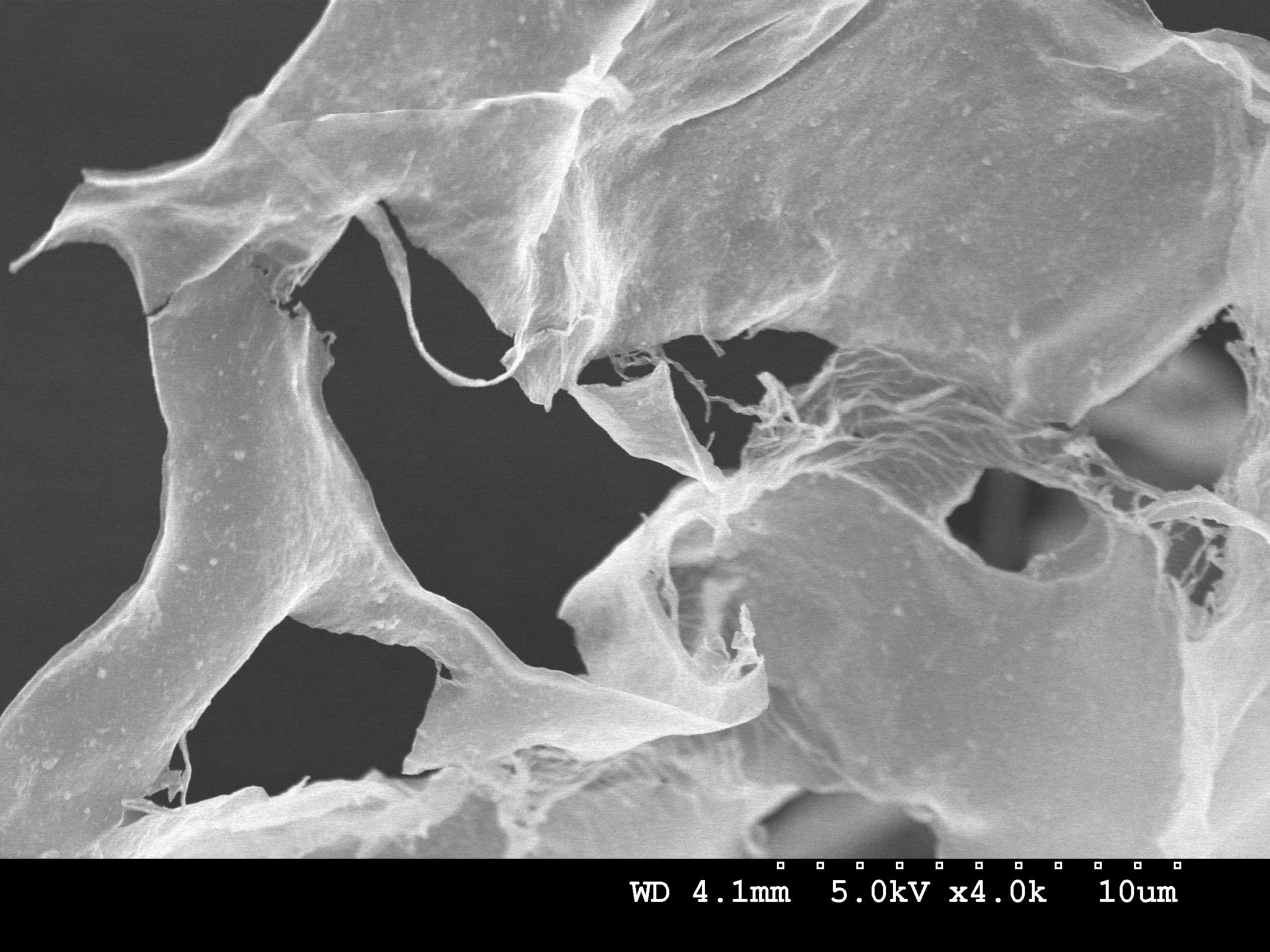 2D thin MXene sheet