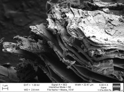 Exfoliated 2D material