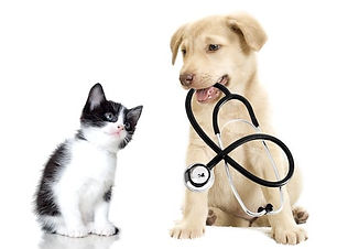 vaccin et passeport chiot chaton.jpg