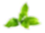 Green-Tea-PNG-Image.png