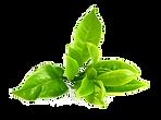 Green-Tea-PNG-Image.png