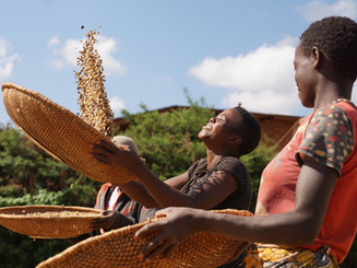 JNPCoffee_WomenCoffee_Drying_Burundi.JPG