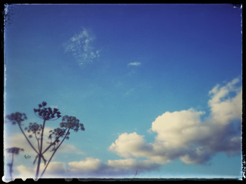 Clouds and a dead flower.....