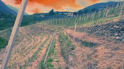 Weingarten Steilhang