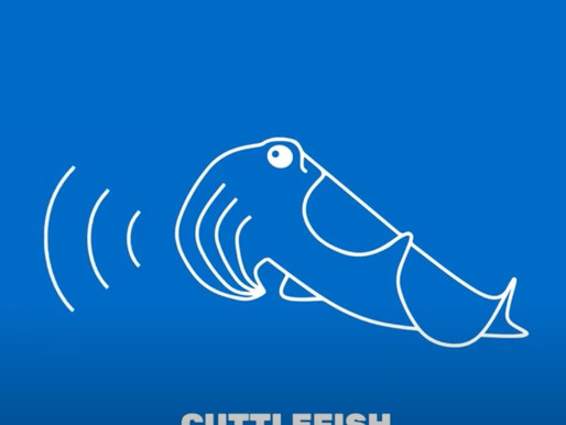 Chris speaks with Cuttlefish News
