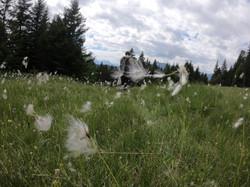 hiking Alpes 9