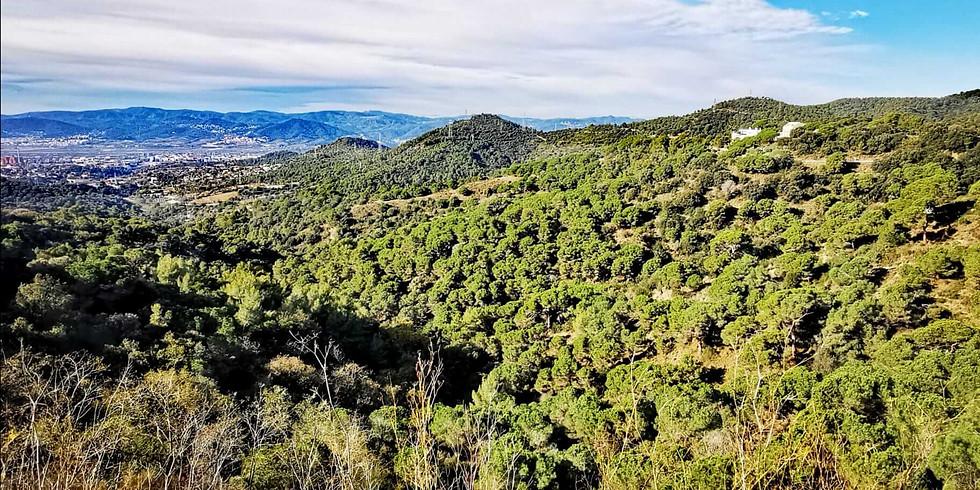 Senderismo al amanecer en Collserola - Santa Creu D'Olorda