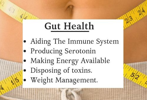 Best Time To Take Probiotics For Gut Health
