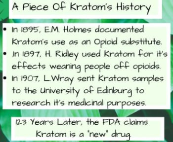 Kratom Powder History as Opioid Replacement