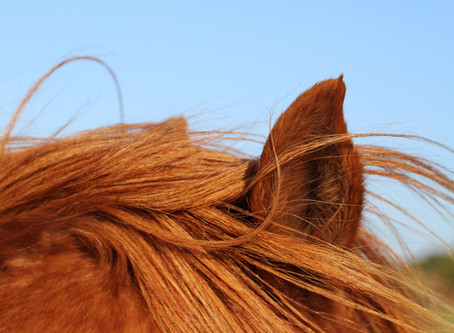 All together for equine welfare