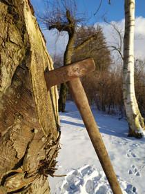 Bijl in de boom bij bijlwerpen