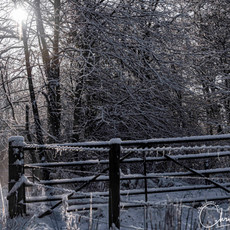 Winter Scene: Baron's Haugh Nature Reserve