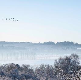 Winter Scene: Baron's Haugh, Motherwell
