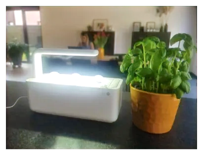 Kruimel kreeg dezelfde en zette de Click & Grow naast een volwassen basilicumplant, ter vergelijking.