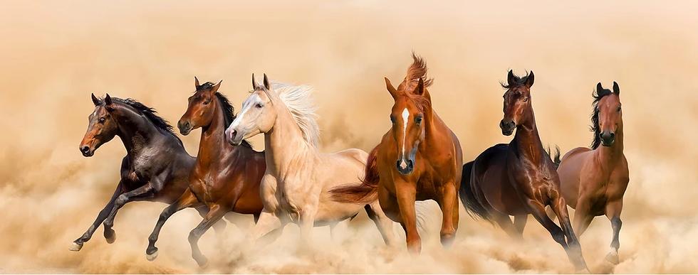 44849642_running_horses_ci_1024x1024.web