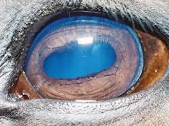 Full eye.jpg