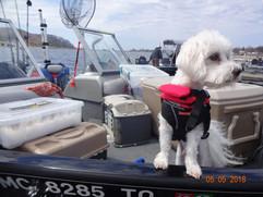 Tim Potter's dog on patrol