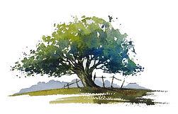 Watercolour tree by Paul Clark