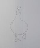 DuckLine.png