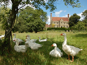 house-and-geese-publicity-1024x681.jpg