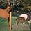 """Thumbnail: Non-Climb Horse Fence 12.5ga 60""""  x 100'"""