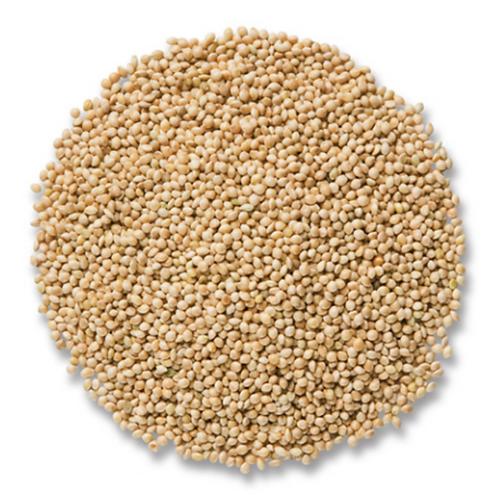 White Millet 10#