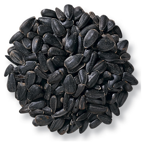 Black Oil Sunflower Seeds 10#