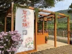 萬里瑪鋉溪畔杜鵑花開 打造台版屋久島小田汲川