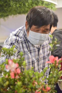 杜鵑博士柳枝芳 培育600種新品系驚喜中獲成就