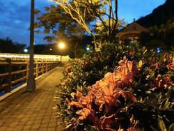 萬里瑪鋉溪畔杜鵑花開 打造臺版屋久島小田汲川