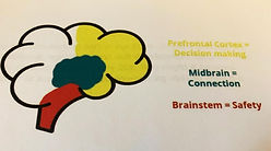 An illustration of the brain. The regions of the brain are highlighted: prefrontal cortex - decision making, midbrain - connection, brainstem - safety.