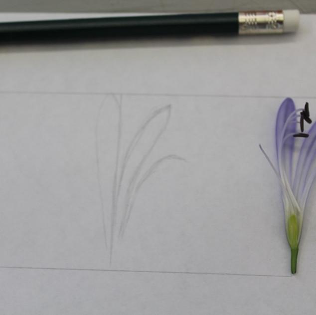 Disecciones florales: estudio, dibujo y color