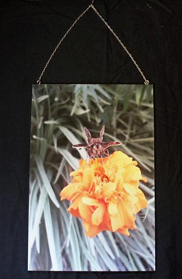 Photography Pollination